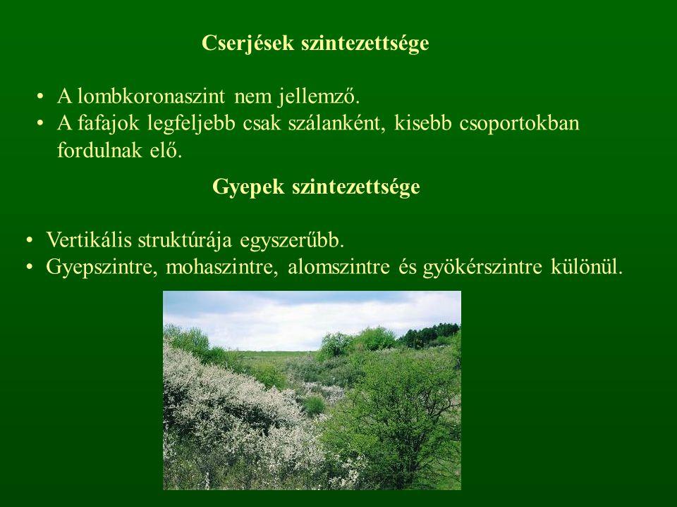 ÁllományszintekMagasságErdőkCserjésekGyepek Faszint> 5 mfák-- Cserjeszint 5 – 0,5 mcserjék, fiatal fákcserjék- Gyepszint1,5 – 0 m fák és cserjék újulata + törpe- és félcserjék, lágyszárú növények Mohaszint10 cm – 0 cmmohok, zuzmók, gombák és algák Alomszint átmenetgombák micéliumai és baktériumok, talajállatok, elhalt szervesanyag Gyökérszint< 0 mgyökerek és hajtásrészek (rizóma, hagyma, gumó, etc.) Az erdők, cserjések és gyepek vertikális szerkezetének összefoglaló táblázata