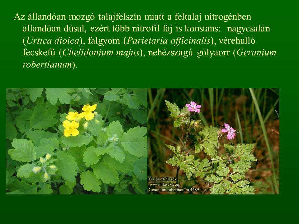 Az állandóan mozgó talajfelszín miatt a feltalaj nitrogénben állandóan dúsul, ezért több nitrofil faj is konstans: nagycsalán (Urtica dioica), falgyom