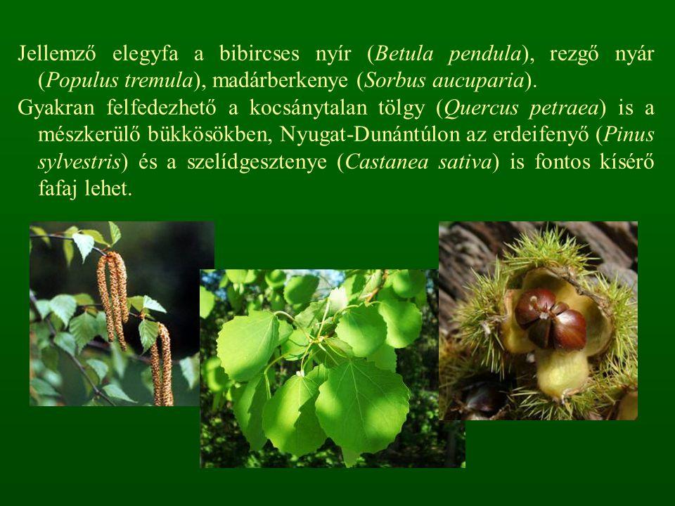 Jellemző elegyfa a bibircses nyír (Betula pendula), rezgő nyár (Populus tremula), madárberkenye (Sorbus aucuparia). Gyakran felfedezhető a kocsánytala