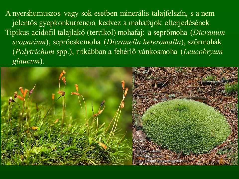 A nyershumuszos vagy sok esetben minerális talajfelszín, s a nem jelentős gyepkonkurrencia kedvez a mohafajok elterjedésének Tipikus acidofil talajlak