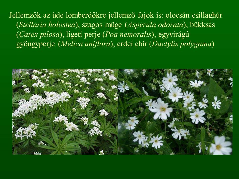 Jellemzők az üde lomberdőkre jellemző fajok is: olocsán csillaghúr (Stellaria holostea), szagos müge (Asperula odorata), bükksás (Carex pilosa), liget