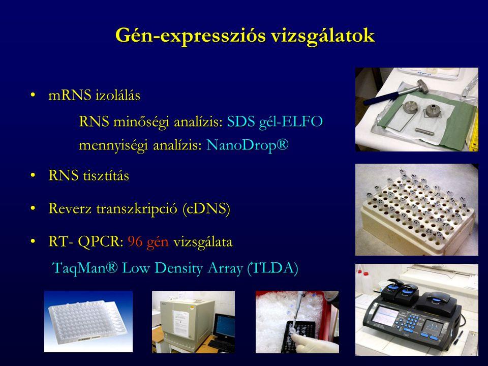 Gén-expressziós vizsgálatok mRNS izolálásmRNS izolálás RNS minőségi analízis: SDS gél-ELFO mennyiségi analízis: NanoDrop® RNS tisztításRNS tisztítás Reverz transzkripció (cDNS)Reverz transzkripció (cDNS) RT- QPCR: 96 gén vizsgálataRT- QPCR: 96 gén vizsgálata TaqMan® Low Density Array (TLDA) TaqMan® Low Density Array (TLDA)