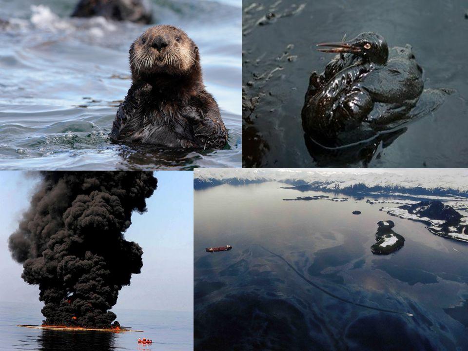 Mexikói öböl olajkatasztrófája 2010 áprilisa 2010 áprilisa Deepwater Horizon kúton egy robbanás után kezdődött meg az olajszivárgás Deepwater Horizon kúton egy robbanás után kezdődött meg az olajszivárgás 550 ezer tonna olaj került az öbölbe 550 ezer tonna olaj került az öbölbe 2014.Julius 14-i adatok