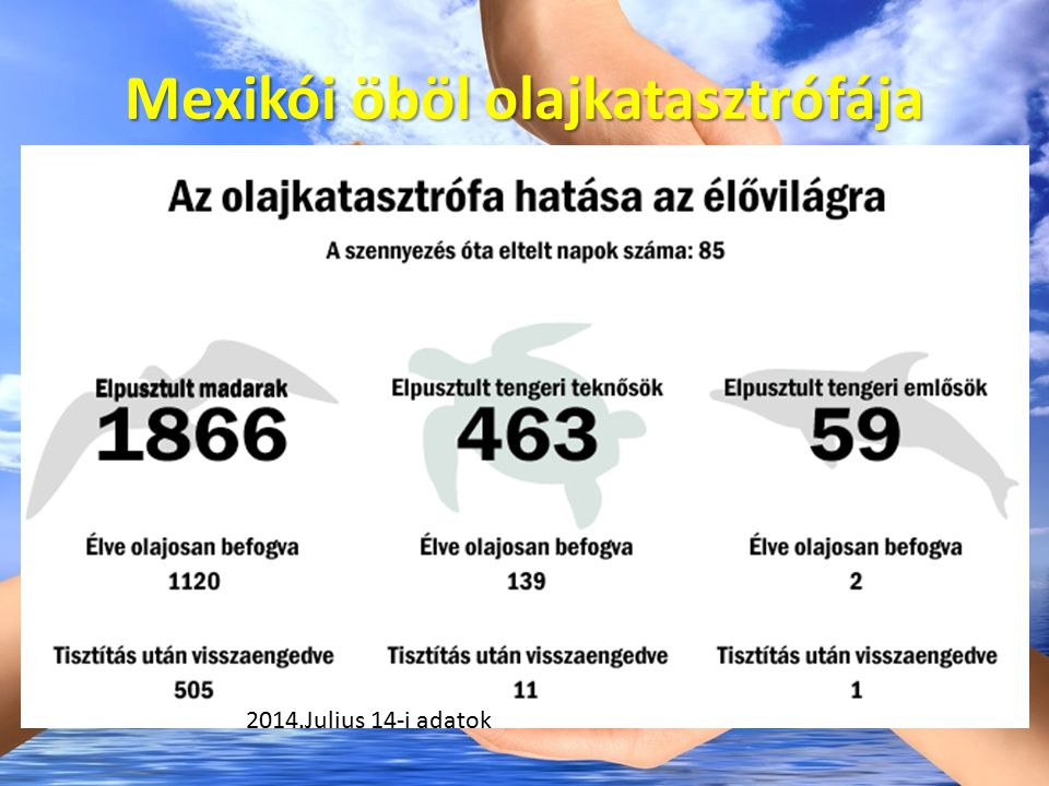 Az olajszennyezések hatása az állatvilágra Madarak: nyugodt vizeket keresnek a halászathoz, de az olajréteget nem látják felülről.