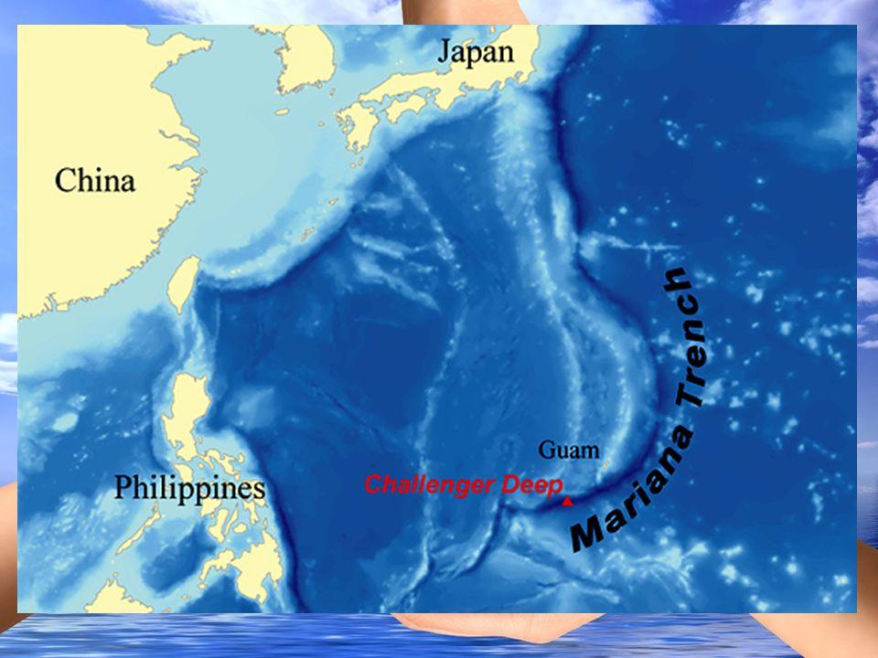 Óceánok, tengerek szennyezéseinek csoportosítása Akusztikai szennyezés Akusztikai szennyezés Szemétszigetek az óceánokban Szemétszigetek az óceánokban Olajszennyezések Olajszennyezések