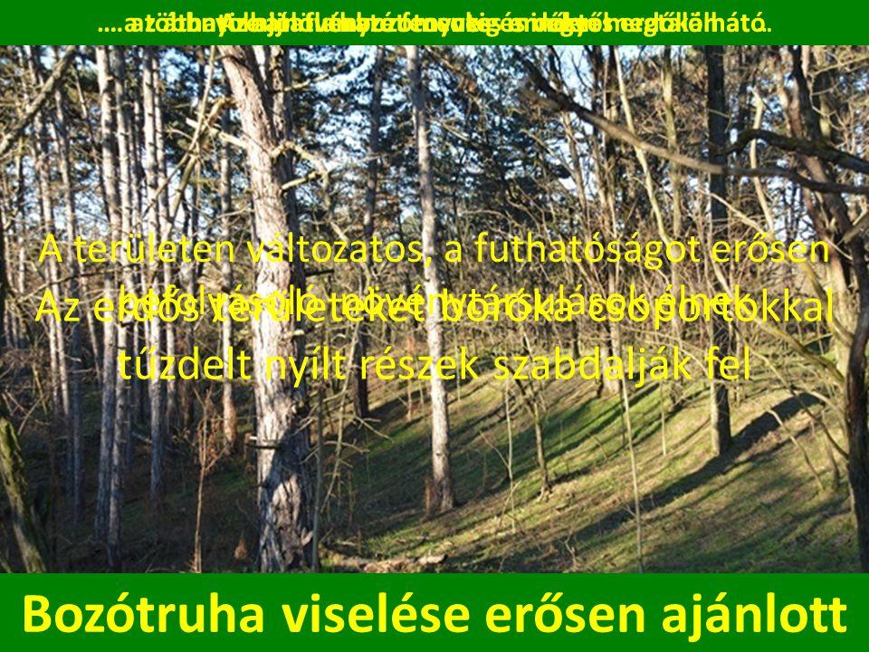 A területen változatos, a futhatóságot erősen befolyásoló növénytársulások élnek Az aljnövényzet mentes erdőktől … Bozótruha viselése erősen ajánlott Az erdős területeket boróka csoportokkal tűzdelt nyílt részek szabdalják fel … az áthatolhatatlan bozótosokig minden megtalálható… a többnyire jól futható fenyves és vegyes erdőkön át …