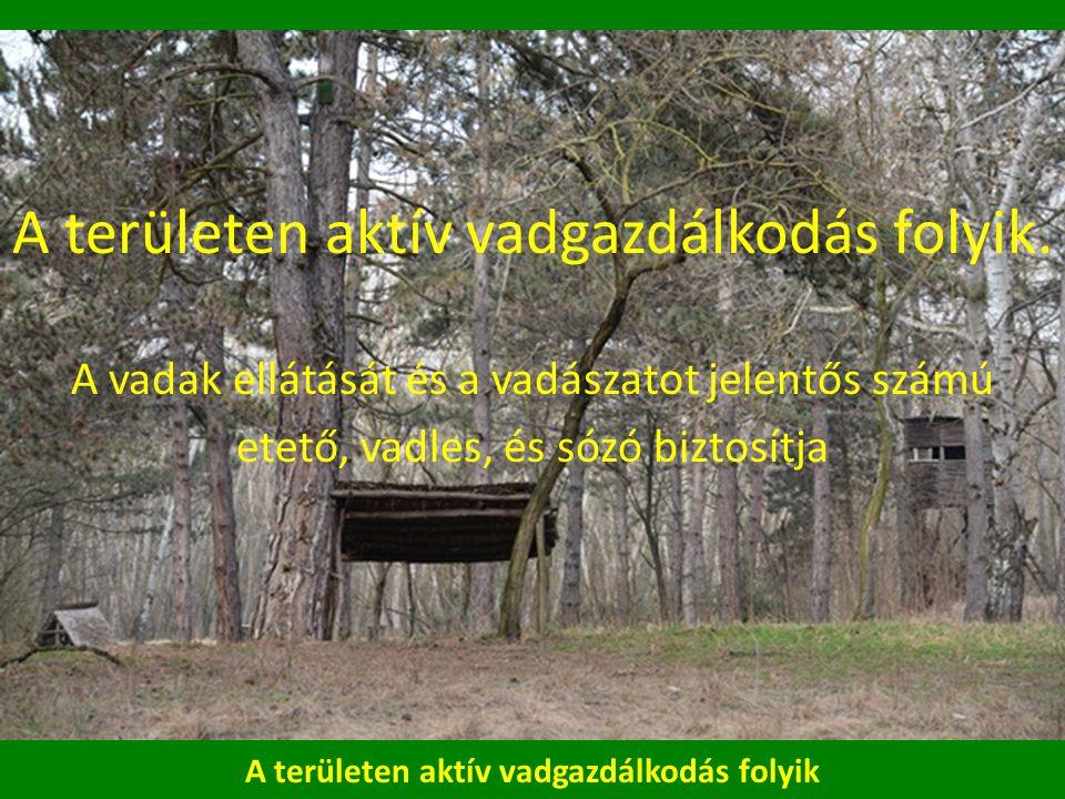 A területen aktív vadgazdálkodás folyik A területen aktív vadgazdálkodás folyik.