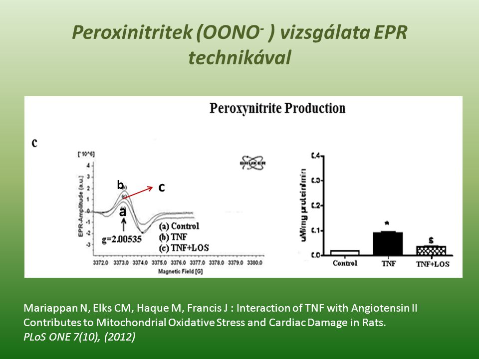 Mariappan N, Elks CM, Haque M, Francis J : Interaction of TNF with Angiotensin II Contributes to Mitochondrial Oxidative Stress and Cardiac Damage in