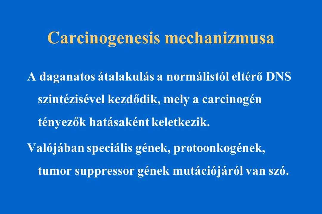 Carcinogenesis mechanizmusa A daganatos átalakulás a normálistól eltérő DNS szintézisével kezdődik, mely a carcinogén tényezők hatásaként keletkezik.