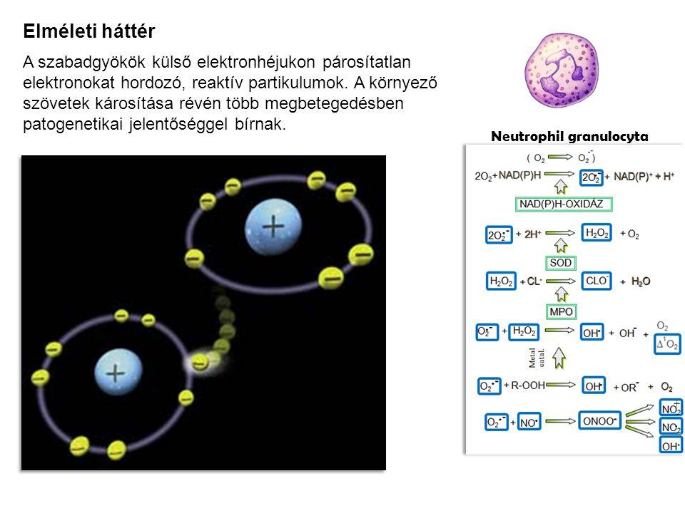 Elméleti háttér A szabadgyökök külső elektronhéjukon párosítatlan elektronokat hordozó, reaktív partikulumok.