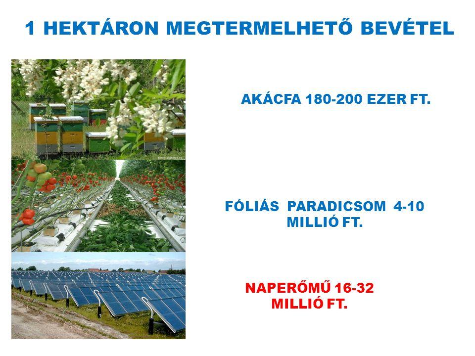 1 HEKTÁRON MEGTERMELHETŐ BEVÉTEL AKÁCFA 180-200 EZER FT.