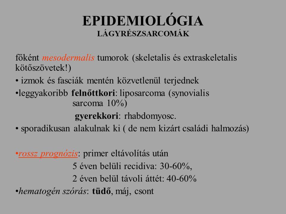 EPIDEMIOLÓGIA LÁGYRÉSZSARCOMÁK főként mesodermalis tumorok (skeletalis és extraskeletalis kötőszövetek!) izmok és fasciák mentén közvetlenül terjednek leggyakoribb felnőttkori: liposarcoma (synovialis sarcoma 10%) gyerekkori: rhabdomyosc.