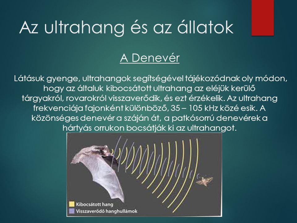 Az ultrahang és az állatok A Denevér Látásuk gyenge, ultrahangok segítségével tájékozódnak oly módon, hogy az általuk kibocsátott ultrahang az eléjük