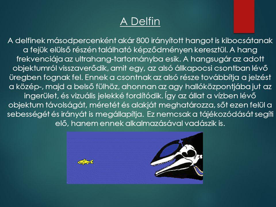A Delfin A delfinek másodpercenként akár 800 irányított hangot is kibocsátanak a fejük elülső részén található képződményen keresztül. A hang frekvenc