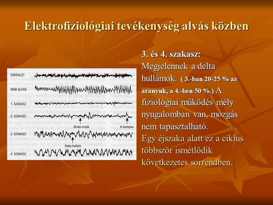 Elektrofiziológiai tevékenység alvás közben 3. és 4. szakasz: Megjelennek a delta hullámok. ( 3.-ban 20-25 % az arányuk, a 4.-ben 50 %.) A fiziológiai