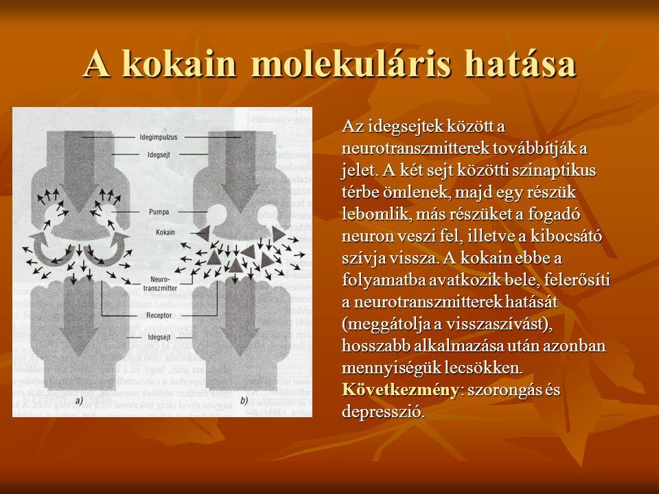 A kokain molekuláris hatása Az idegsejtek között a neurotranszmitterek továbbítják a jelet. A két sejt közötti szinaptikus térbe ömlenek, majd egy rés