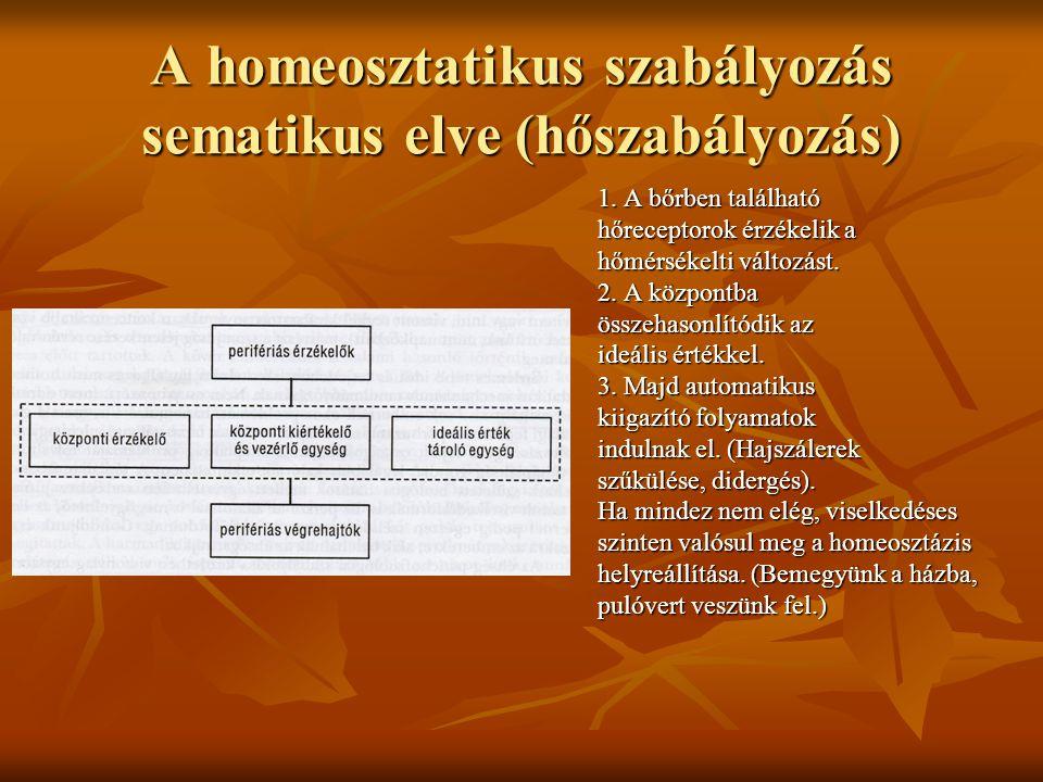 A homeosztatikus szabályozás sematikus elve (hőszabályozás) 1. A bőrben található hőreceptorok érzékelik a hőmérsékelti változást. 2. A központba össz