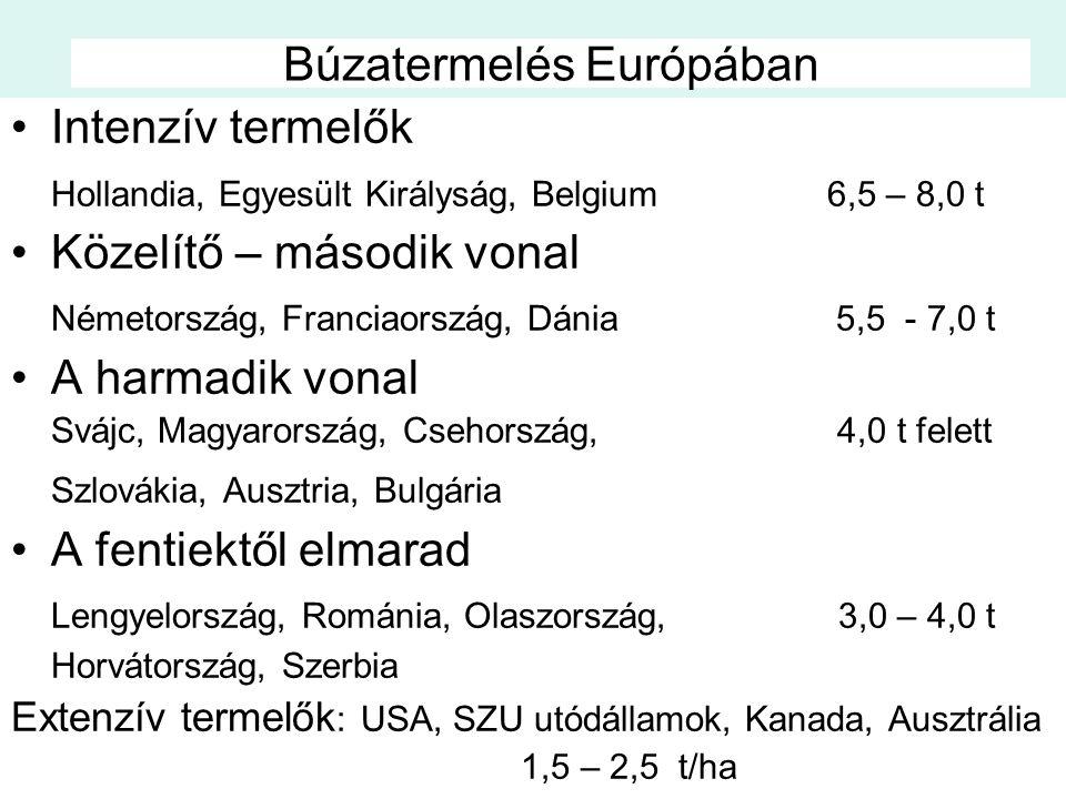 Búzatermelés Európában Intenzív termelők Hollandia, Egyesült Királyság, Belgium 6,5 – 8,0 t Közelítő – második vonal Németország, Franciaország, Dánia