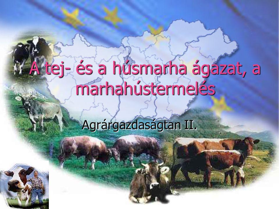 A tej- és a húsmarha ágazat, a marhahústermelés Agrárgazdaságtan II.