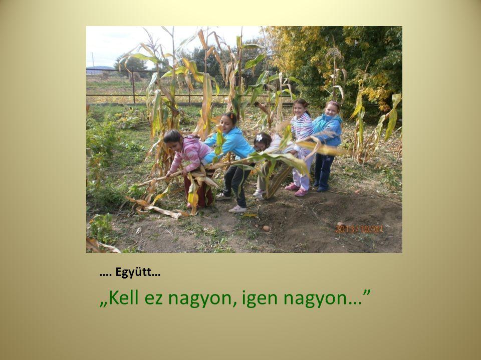 2.Működés Önkormányzat:kert és a kertvezető 1- 8 osztály gyermekek Igazgató által kijelölt órákról engedik el a gyerekeket 4-6 fős csoportokban Szaktanár előre megtervezett program szerint dolgozik .