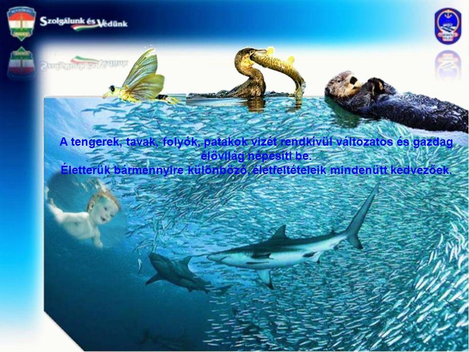 A tengerek, tavak, folyók, patakok vizét rendkívül változatos és gazdag élővilág népesíti be. Életterük bármennyire különböző, életfeltételeik mindenü