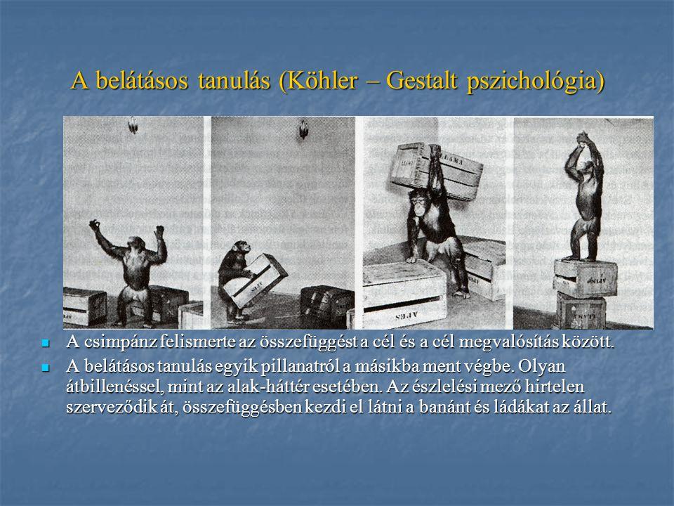 A belátásos tanulás (Köhler – Gestalt pszichológia) A csimpánz felismerte az összefüggést a cél és a cél megvalósítás között. A csimpánz felismerte az