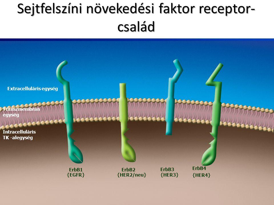 Extracelluláris egység Transzmembrán egység Intracelluláris TK -alegység ErbB1ErbB2 ErbB3 {EGFR}{HER2/neu}{HER3} ErbB4 {HER4} Sejtfelszíni növekedési