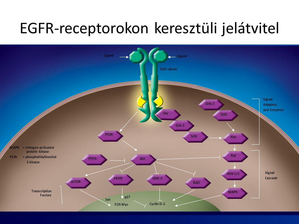 P13K FKHR Akt mTOR PTEN MEK 1/2 MAPK BAD GSK-3 SOS Grb-2 Shc Grb-2 SOS Ras Raf Jun FOS Myc p27 Cyclin D-1 Ligand Signal Adapters and Enzymes Signal Ca