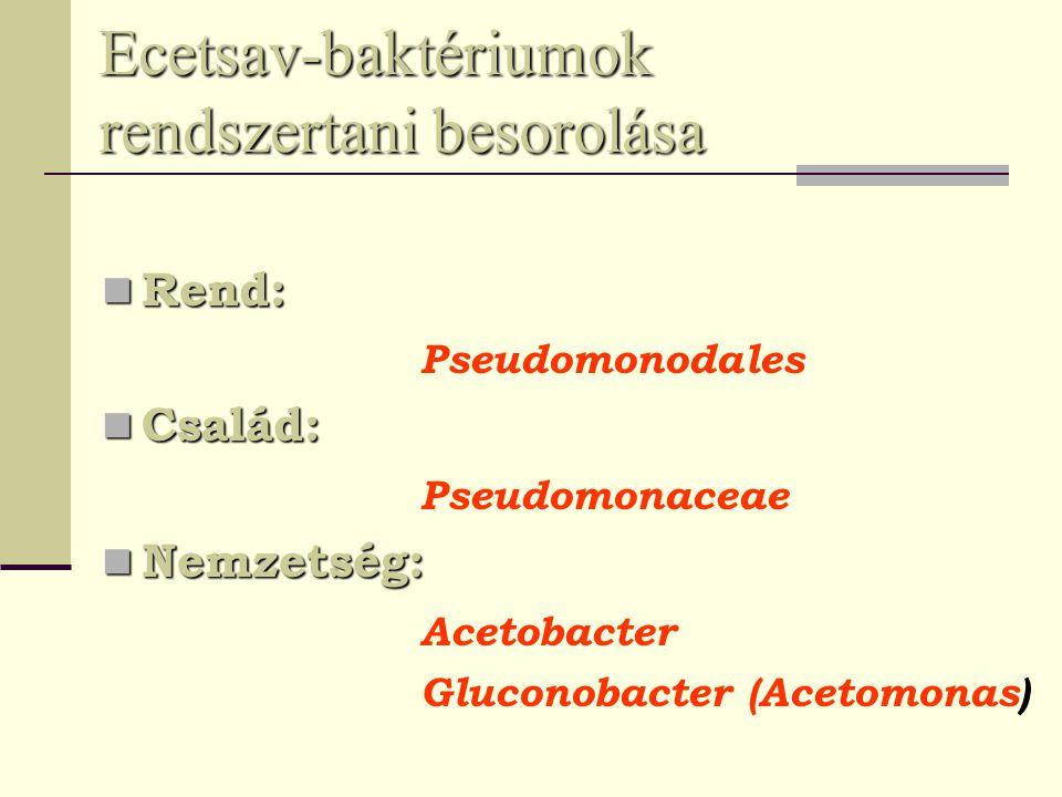 Ecetsav-baktériumok rendszertani besorolása Rend: Rend: Pseudomonodales Család: Család: Pseudomonaceae Nemzetség: Nemzetség: Acetobacter Gluconobacter (Acetomonas)