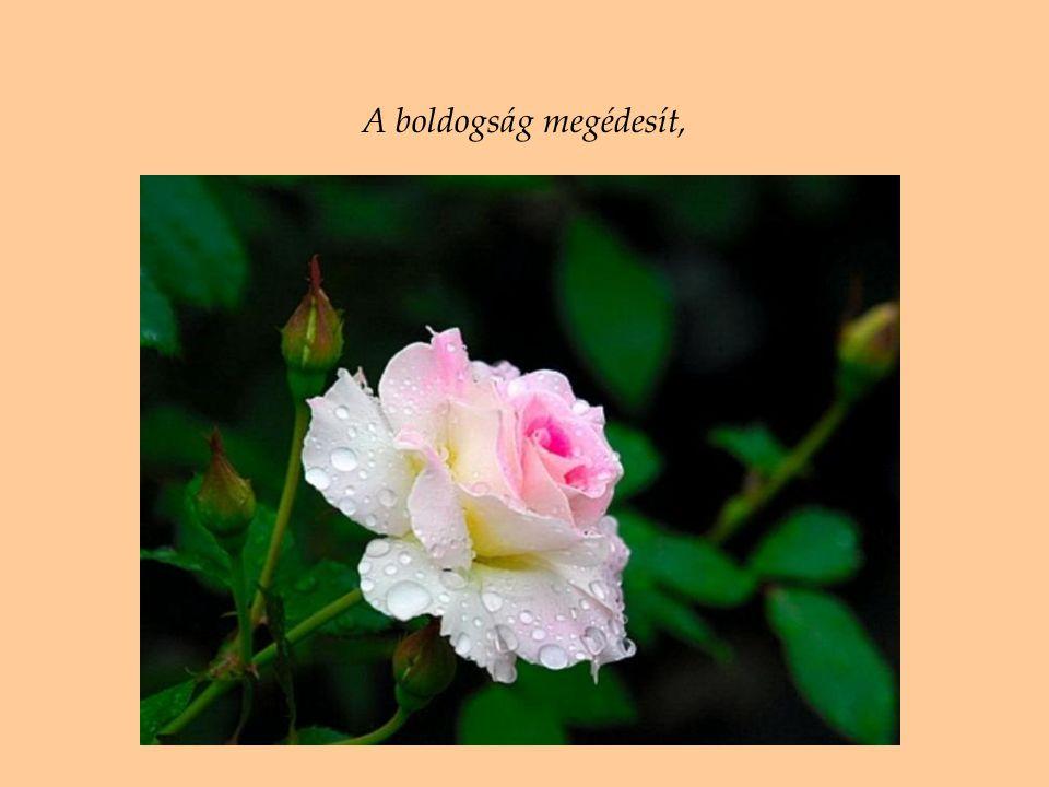 Szeretnék egy szál rózsát és egy szép szót egy jóbaráttól, amíg még vagyok…