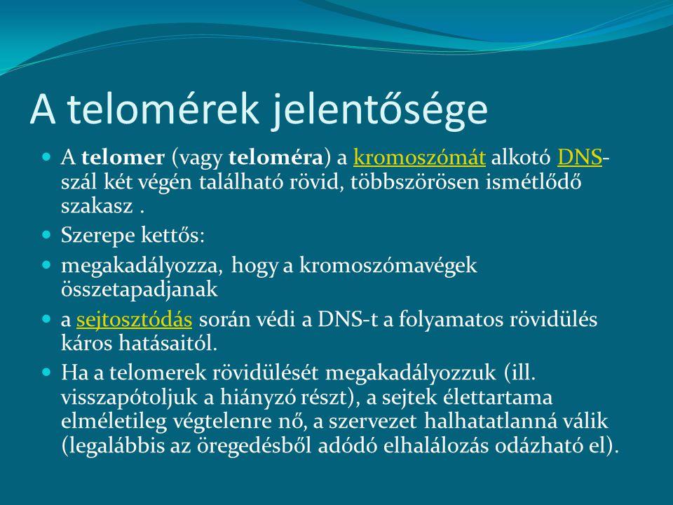 A telomérek jelentősége A telomer (vagy teloméra) a kromoszómát alkotó DNS- szál két végén található rövid, többszörösen ismétlődő szakasz.kromoszómátDNS Szerepe kettős: megakadályozza, hogy a kromoszómavégek összetapadjanak a sejtosztódás során védi a DNS-t a folyamatos rövidülés káros hatásaitól.sejtosztódás Ha a telomerek rövidülését megakadályozzuk (ill.