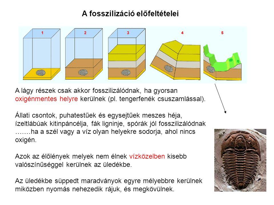 A fosszilizáció előfeltételei A lágy részek csak akkor fosszilizálódnak, ha gyorsan oxigénmentes helyre kerülnek (pl. tengerfenék csuszamlással). Álla