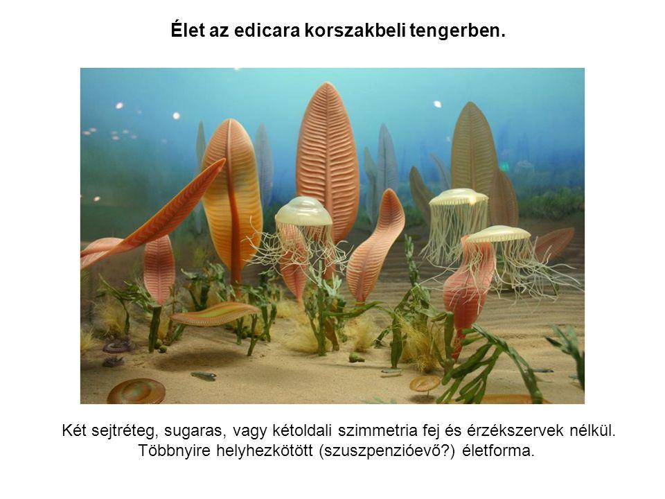 Élet az edicara korszakbeli tengerben. Két sejtréteg, sugaras, vagy kétoldali szimmetria fej és érzékszervek nélkül. Többnyire helyhezkötött (szuszpen