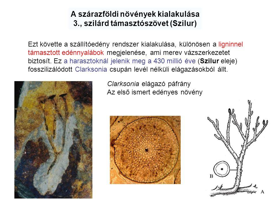 A szárazföldi növények kialakulása 3., szilárd támasztószövet (Szilur) Ezt követte a szállítóedény rendszer kialakulása, különösen a ligninnel támaszt