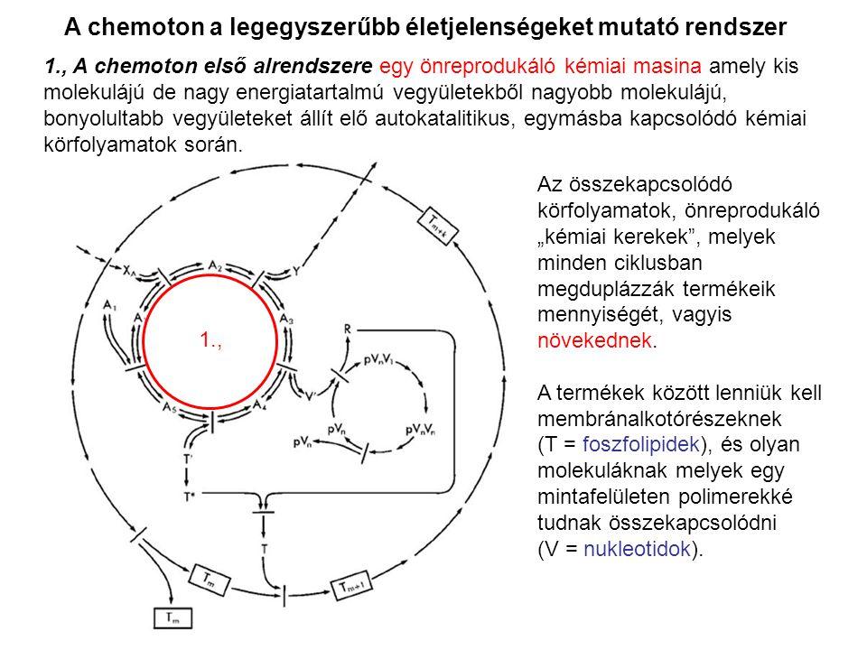 A chemoton a legegyszerűbb életjelenségeket mutató rendszer 1., A chemoton első alrendszere egy önreprodukáló kémiai masina amely kis molekulájú de na