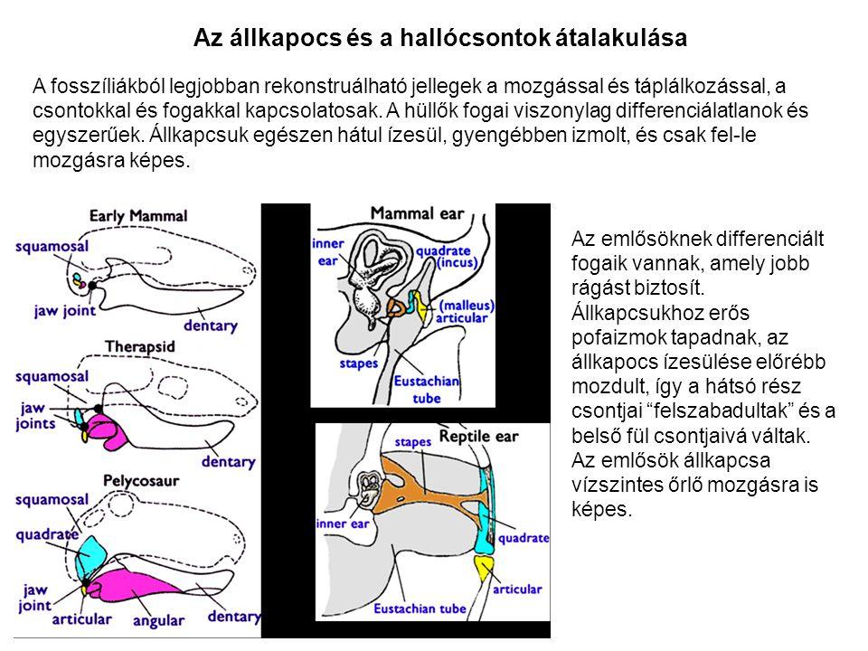 A fosszíliákból legjobban rekonstruálható jellegek a mozgással és táplálkozással, a csontokkal és fogakkal kapcsolatosak. A hüllők fogai viszonylag di