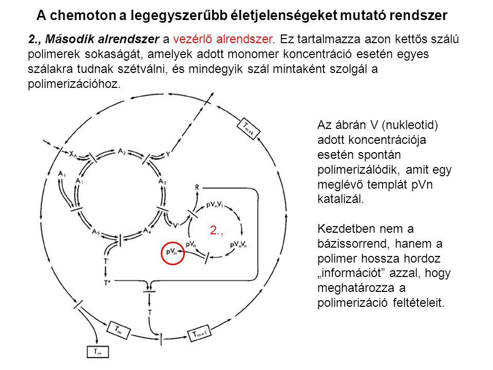 A chemoton a legegyszerűbb életjelenségeket mutató rendszer Az ábrán V (nukleotid) adott koncentrációja esetén spontán polimerizálódik, amit egy meglé