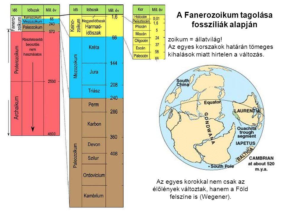 A Fanerozoikum tagolása fosszíliák alapján zoikum = állatvilág! Az egyes korszakok határán tömeges kihalások miatt hirtelen a változás. Az egyes korok