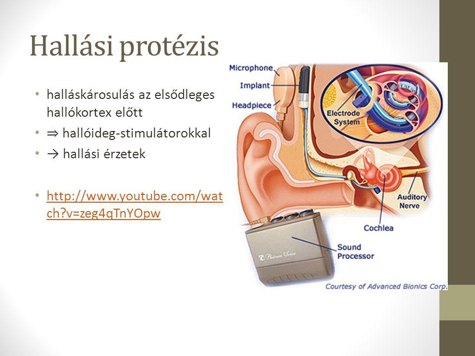 Hallási protézis halláskárosulás az elsődleges hallókortex előtt ⇒ hallóideg-stimulátorokkal → hallási érzetek http://www.youtube.com/wat ch?v=zeg4qTn