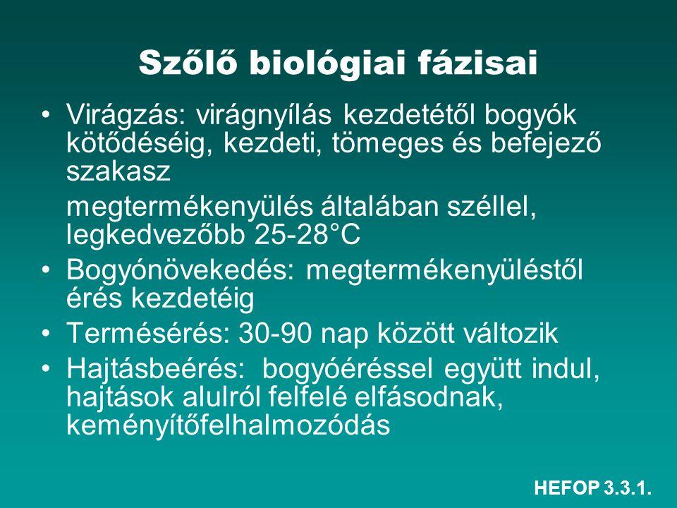 HEFOP 3.3.1. Szőlő biológiai fázisai Virágzás: virágnyílás kezdetétől bogyók kötődéséig, kezdeti, tömeges és befejező szakasz megtermékenyülés általáb