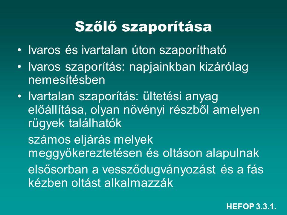 HEFOP 3.3.1. Szőlő szaporítása Ivaros és ivartalan úton szaporítható Ivaros szaporítás: napjainkban kizárólag nemesítésben Ivartalan szaporítás: ültet