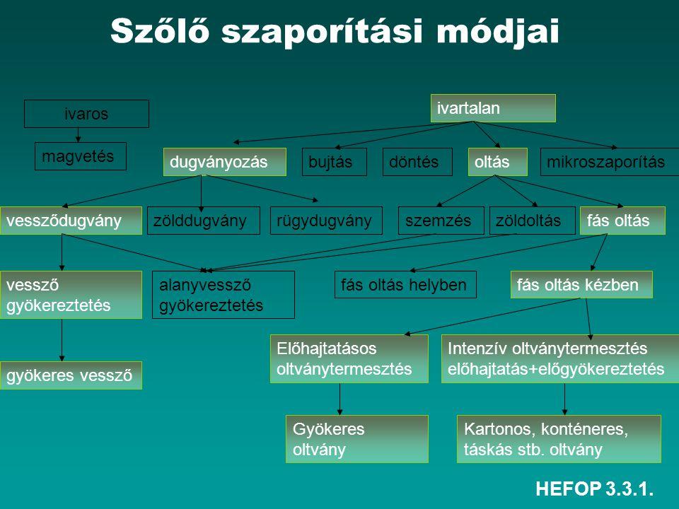 HEFOP 3.3.1. Szőlő szaporítási módjai ivartalan ivaros oltásdugványozás magvetés bujtásdöntésmikroszaporítás vessződugványzölddugványrügydugványszemzé