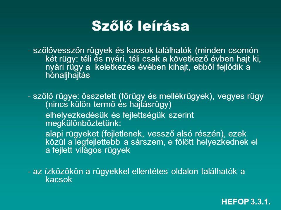 HEFOP 3.3.1. Szőlő leírása - szőlővesszőn rügyek és kacsok találhatók (minden csomón két rügy: téli és nyári, téli csak a következő évben hajt ki, nyá