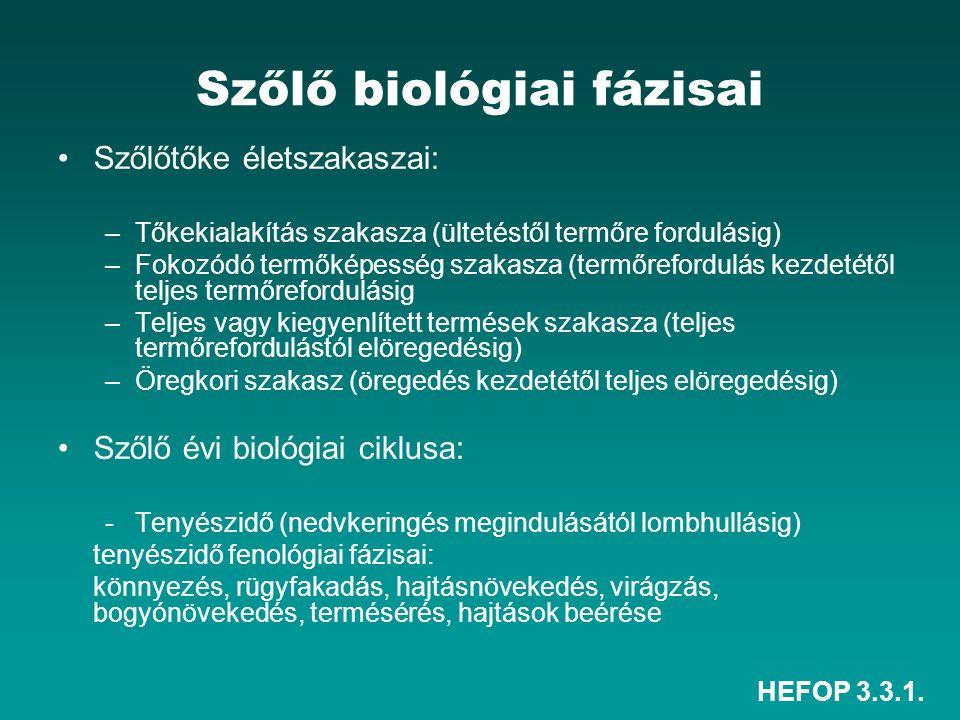 HEFOP 3.3.1. Szőlő biológiai fázisai Szőlőtőke életszakaszai: –Tőkekialakítás szakasza (ültetéstől termőre fordulásig) –Fokozódó termőképesség szakasz