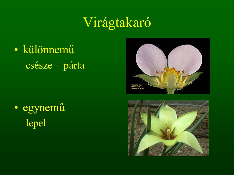 1.3. barka virágzat