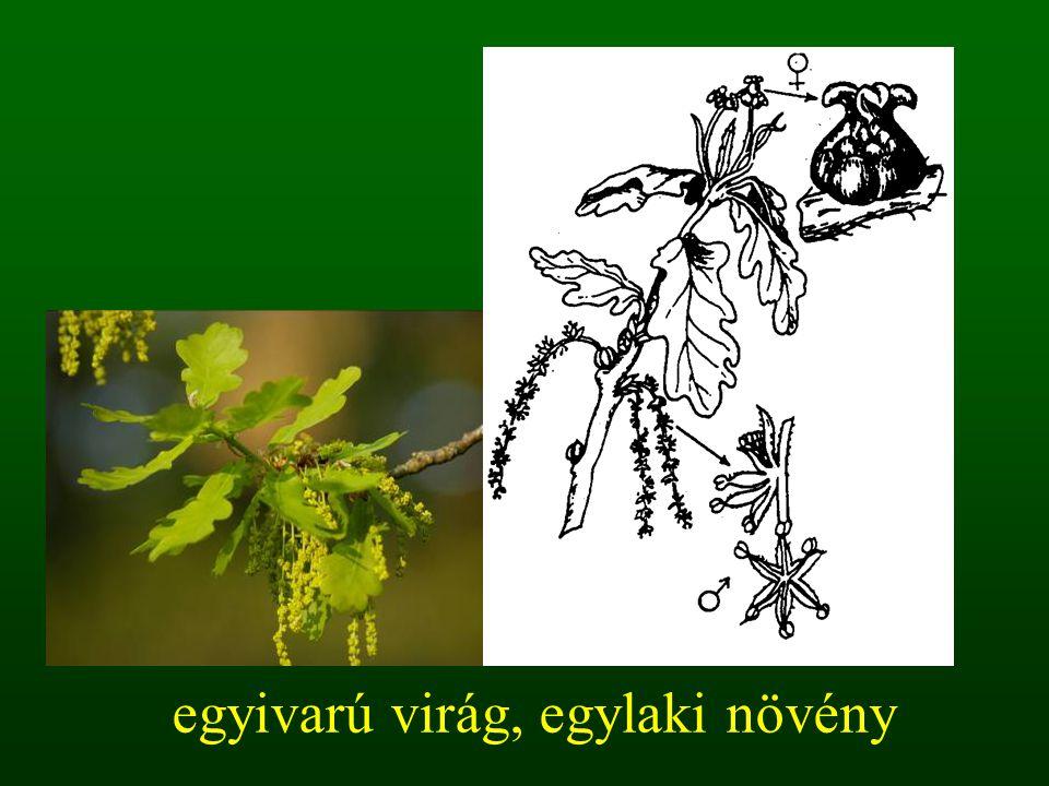 egyivarú virág, egylaki növény