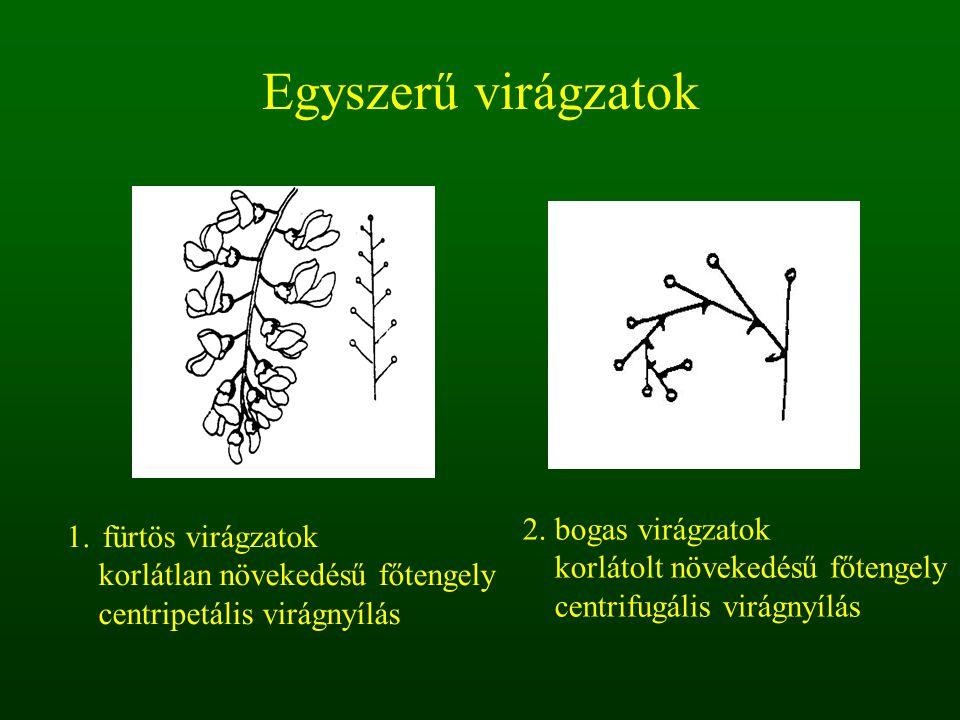 Egyszerű virágzatok 1.fürtös virágzatok korlátlan növekedésű főtengely centripetális virágnyílás 2. bogas virágzatok korlátolt növekedésű főtengely ce