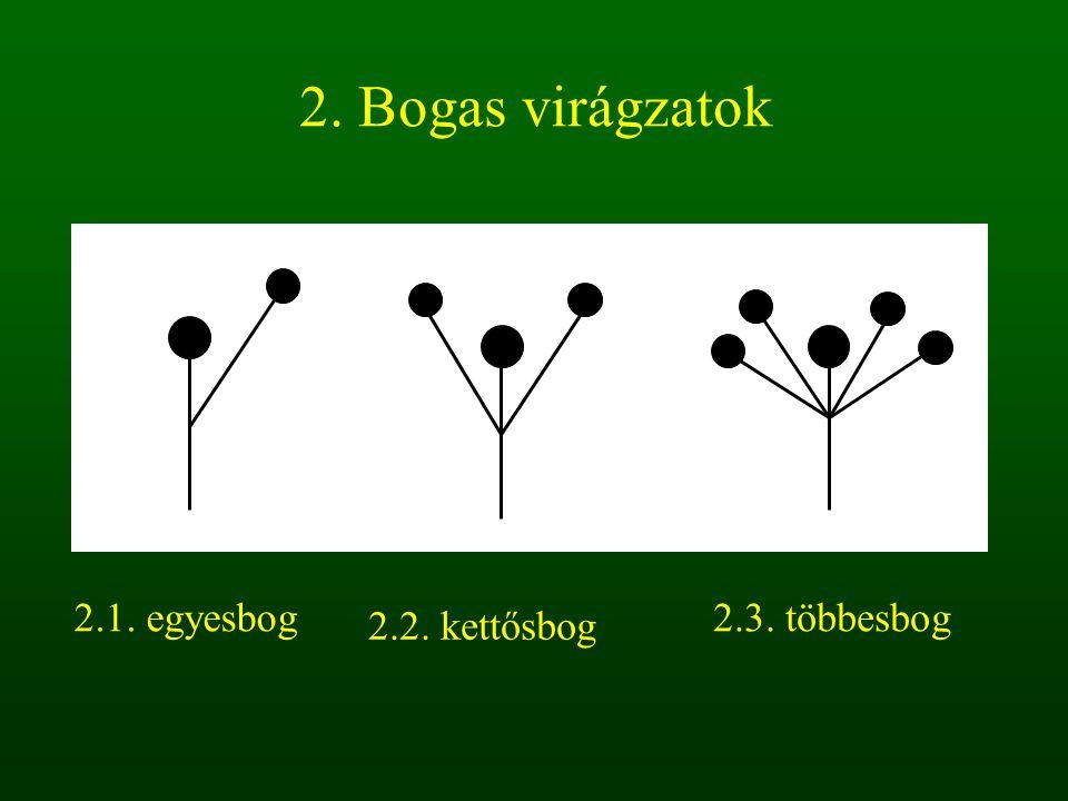 2. Bogas virágzatok 2.1. egyesbog 2.2. kettősbog 2.3. többesbog