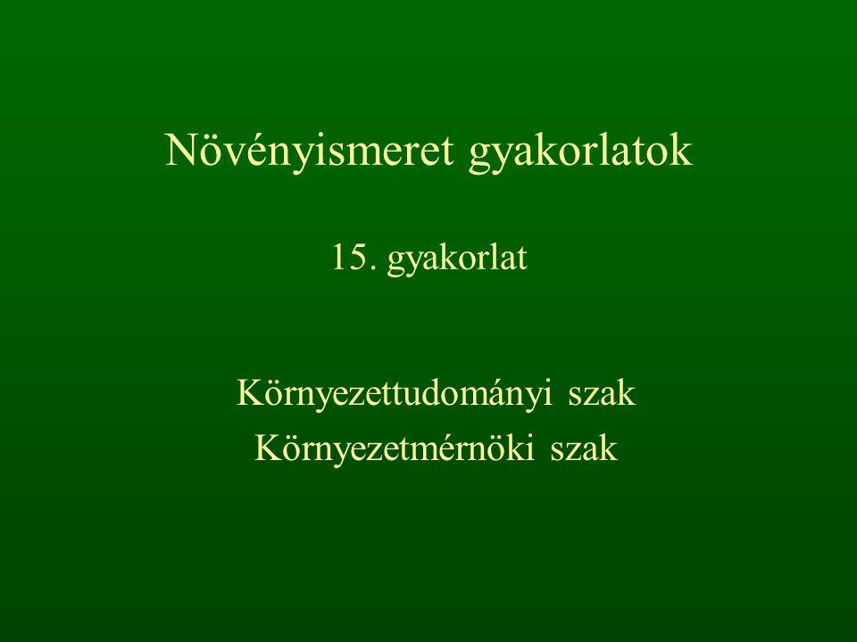 Csomós ebír – Dactylis glomerata 50-100 cm, röviden tarackos vagy lazán csomós tövű évelő (He).