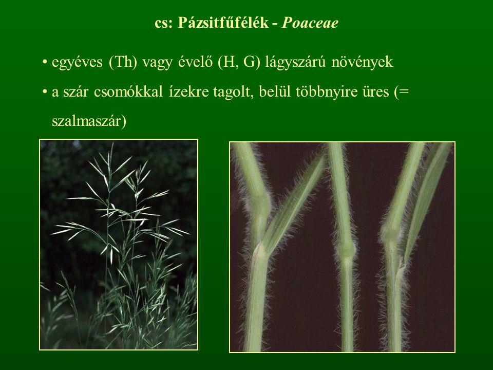 cs: Pázsitfűfélék - Poaceae egyéves (Th) vagy évelő (H, G) lágyszárú növények a szár csomókkal ízekre tagolt, belül többnyire üres (= szalmaszár)